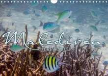 Clave Rodriguez Photography: Unterwasserwelt der Malediven III (Wandkalender 2020 DIN A4 quer), Diverse