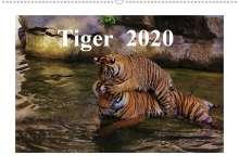 Jörg Hennig: Tiger  2020 (Wandkalender 2020 DIN A2 quer), Diverse