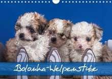 Gabriela Wejat-Zaretzke: Bolonka Welpenstube (Wandkalender 2020 DIN A4 quer), Diverse