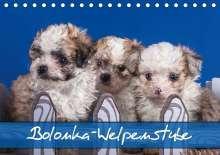 Gabriela Wejat-Zaretzke: Bolonka Welpenstube (Tischkalender 2020 DIN A5 quer), Diverse
