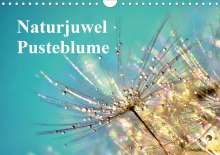 Julia Delgado: Naturjuwel Pusteblume (Wandkalender 2020 DIN A4 quer), Diverse