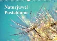 Julia Delgado: Naturjuwel Pusteblume (Wandkalender 2020 DIN A3 quer), Diverse