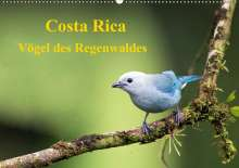K. A. Akrema-Photography: Costa Rica - Vögel des Regenwaldes (Wandkalender 2020 DIN A2 quer), Diverse