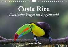 Ursula Di Chito: Costa Rica - Exotische Vögel im Regenwald (Wandkalender 2020 DIN A4 quer), Diverse