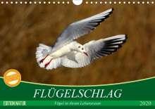 Axel Kottal Claudia Elsner: Flügelschlag - Vögel in ihrem natürlichen Lebensraum (Wandkalender 2020 DIN A4 quer), Diverse