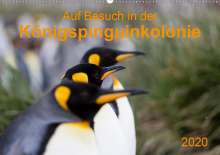 Anna-Barbara Utelli: Auf Besuch in der  Königspinguinkolonie (Wandkalender 2020 DIN A2 quer), Diverse