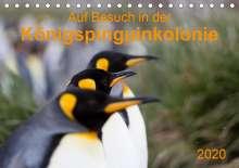 Anna-Barbara Utelli: Auf Besuch in der  Königspinguinkolonie (Tischkalender 2020 DIN A5 quer), Diverse