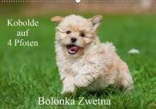 Sigrid Starick: Kobolde auf 4 Pfoten - Bolonka Zwetna (Wandkalender 2020 DIN A2 quer), Diverse