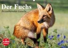 Elisabeth Stanzer: Der Fuchs. Bezaubernder Geselle (Wandkalender 2020 DIN A2 quer), Diverse