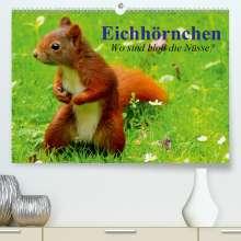 Elisabeth Stanzer: Eichhörnchen. Wo sind bloß die Nüsse?(Premium, hochwertiger DIN A2 Wandkalender 2020, Kunstdruck in Hochglanz), Diverse