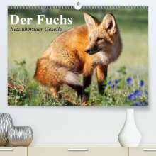 Elisabeth Stanzer: Der Fuchs. Bezaubernder Geselle(Premium, hochwertiger DIN A2 Wandkalender 2020, Kunstdruck in Hochglanz), Diverse