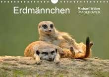 Michael Weber: Erdmännchen - Tierkinder (Wandkalender 2021 DIN A4 quer), Kalender