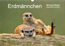 Michael Weber: Erdmännchen - Tierkinder (Wandkalender 2021 DIN A3 quer), Kalender