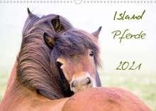 Frauke Gimpel: Islandpferde (Wandkalender 2021 DIN A3 quer), Kalender