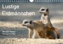 Michael Weber: Lustige Erdmännchen (Wandkalender 2021 DIN A4 quer), Kalender
