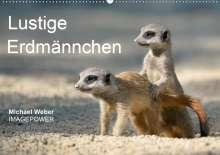 Michael Weber: Lustige Erdmännchen (Wandkalender 2021 DIN A2 quer), Kalender