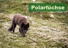 Frauke Gimpel: Polarfüchse (Wandkalender 2021 DIN A3 quer), Kalender