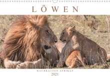 Andreas Lippmann: Löwen - Raubkatzen Afrikas (Wandkalender 2021 DIN A3 quer), Kalender
