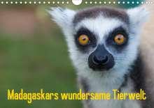 Antje Hopfmann: Madagaskars wundersame Tierwelt (Wandkalender 2021 DIN A4 quer), Kalender