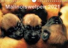 Susanne Schwarzer: Malinoiswelpen 2021 (Wandkalender 2021 DIN A4 quer), Kalender