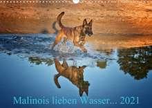 Susanne Schwarzer: Malinois lieben Wasser (Wandkalender 2021 DIN A3 quer), Kalender