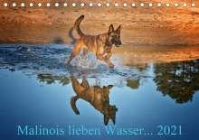 Susanne Schwarzer: Malinois lieben Wasser (Tischkalender 2021 DIN A5 quer), Kalender