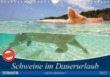 Elisabeth Stanzer: Schweine im Dauerurlaub auf den Bahamas! (Wandkalender 2021 DIN A4 quer), Kalender