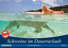 Elisabeth Stanzer: Schweine im Dauerurlaub auf den Bahamas! (Wandkalender 2021 DIN A3 quer), Kalender