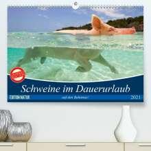 Elisabeth Stanzer: Schweine im Dauerurlaub auf den Bahamas! (Premium, hochwertiger DIN A2 Wandkalender 2021, Kunstdruck in Hochglanz), Kalender
