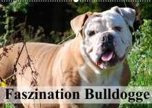 Elisabeth Stanzer: Faszination Bulldogge (Wandkalender 2022 DIN A2 quer), Kalender