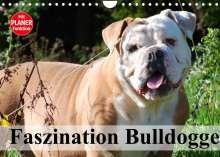 Elisabeth Stanzer: Faszination Bulldogge (Wandkalender 2022 DIN A4 quer), Kalender