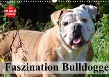 Elisabeth Stanzer: Faszination Bulldogge (Wandkalender 2022 DIN A3 quer), Kalender