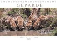 Andreas Lippmann: Geparde - Jäger der Savanne (Tischkalender 2022 DIN A5 quer), Kalender