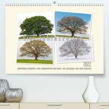 Ingo Gerlach: Vier Jahreszeiten der Eiche. (Premium, hochwertiger DIN A2 Wandkalender 2022, Kunstdruck in Hochglanz), Kalender