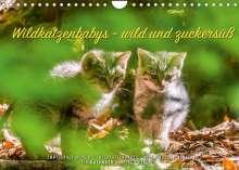 Ingo Gerlach: Wildkatzenbabys - wild und zuckersüß. (Wandkalender 2022 DIN A4 quer), Kalender