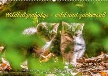 Ingo Gerlach: Wildkatzenbabys - wild und zuckersüß. (Wandkalender 2022 DIN A2 quer), Kalender