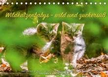 Ingo Gerlach: Wildkatzenbabys - wild und zuckersüß. (Tischkalender 2022 DIN A5 quer), Kalender