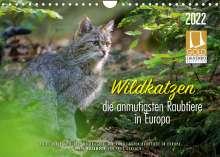 Ingo Gerlach: Wildkatzen - die anmutigsten Raubiere in Europa. (Wandkalender 2022 DIN A4 quer), Kalender