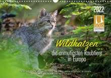 Ingo Gerlach: Wildkatzen - die anmutigsten Raubiere in Europa. (Wandkalender 2022 DIN A3 quer), Kalender
