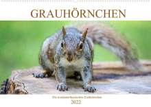 Pixs:Sell@Fotolia: Grauhörnchen-Die nordamerikanischen Eichhörnchen (Wandkalender 2022 DIN A2 quer), Kalender
