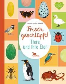 Eva Bártová: Frisch geschlüpft! - Tiere und ihre Eier, Buch