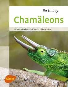 Dominik Kieselbach: Chamäleons, Buch