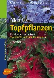 Moritz Bürki: Bildatlas Topfpflanzen für Zimmer und Balkon, Buch