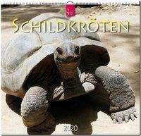 Schildkröten 2020, Diverse