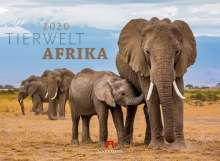 Tierwelt Afrika 2020, Diverse