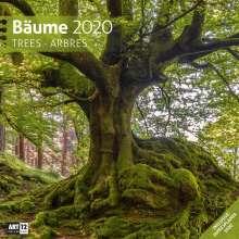 Bäume 2020 Broschürenkalender, Diverse