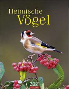 Heimische Vögel - Kalender 2021, Kalender