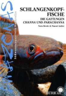 Nora Brede: Art für Art: Schlangenkopffische, Buch