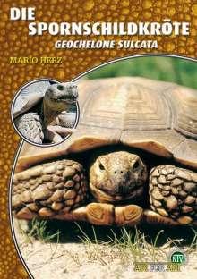 Mario Herz: Die Spornschildkröte, Buch