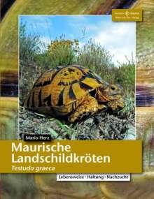 Mario Herz: Maurische Landschildkröten, Buch